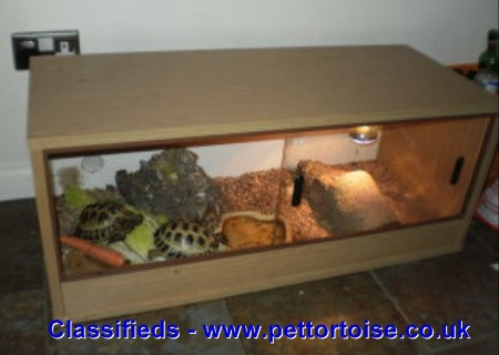 Two Horsfield Tortoises With Vivarium Tortoises For Sale Uk