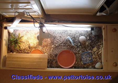 Dwarf Hermanns For Sale Complete Setup Tortoise Tortoises For Sale Uk